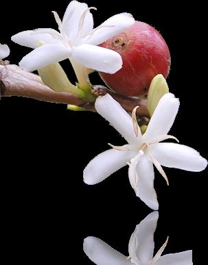 http://wildgayoluwak.com/wp-content/uploads/2014/12/flower_left_edit1.png